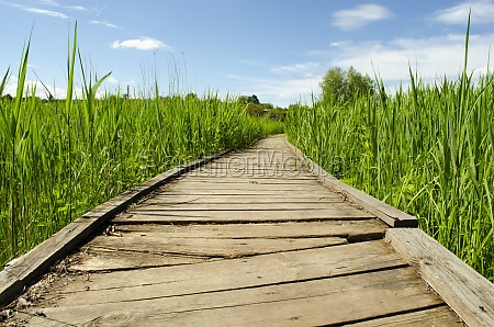 footbridge crossing the dense thickets path