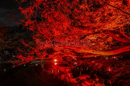 autumn leaves and red illuminated is