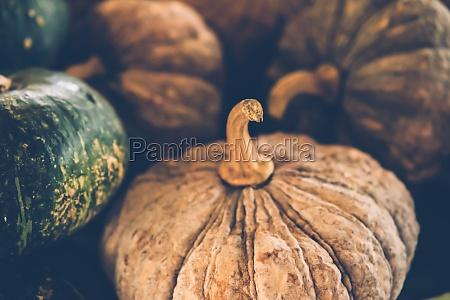 selective focus photography of pumpkins autumn