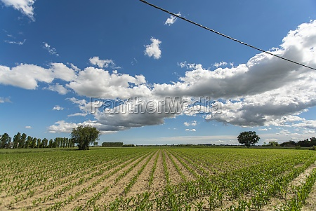 countryside corn field 6
