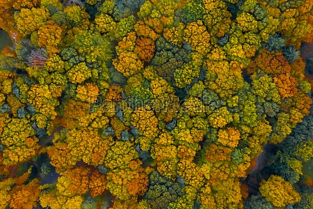 aerial view of colourful trees in