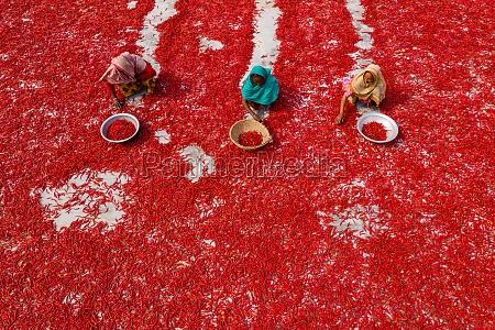 sariakandi bangladesh 02 january 2020