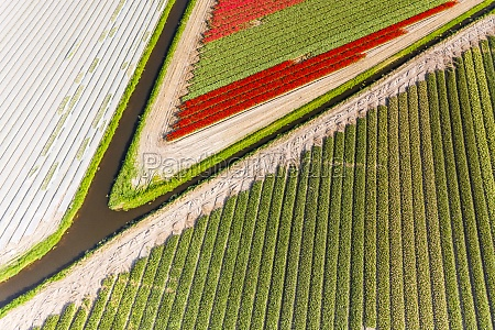 aerial view of beautiful tulip fields