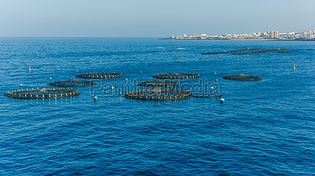 aerial view of fish farming pods
