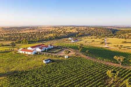 aerial view of vineyard estate portugal