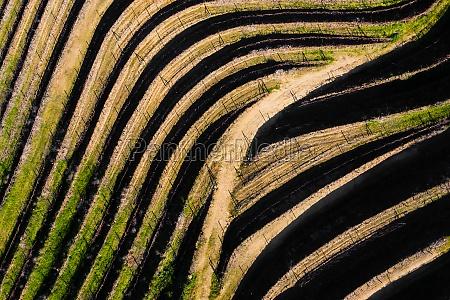 aerial view of vineyards terraces in