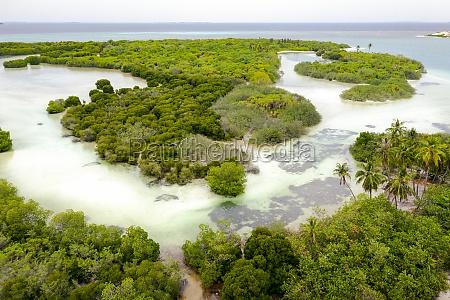 panoramic aerial view of mangroves baarah