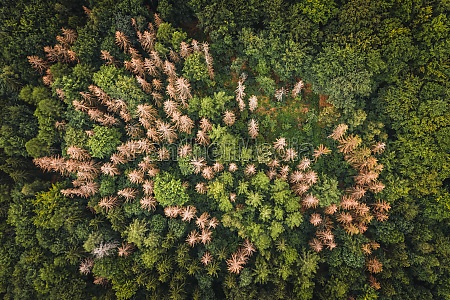 aerial view of a group of