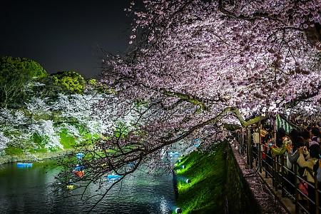 of chidorigafuchi going to see cherry