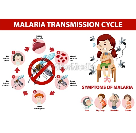 malaria transmission cycle and symptom information