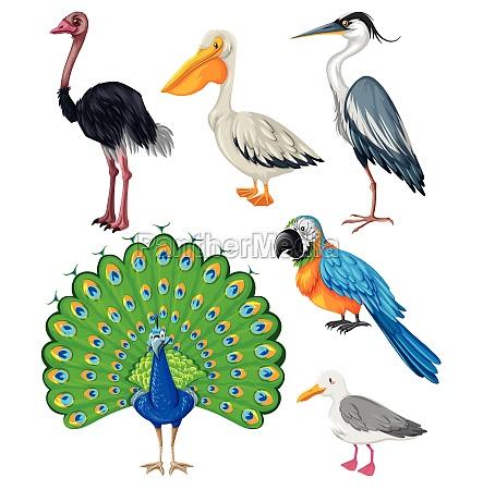 different kind of wild birds