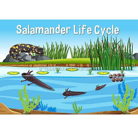 scene with salamander life cycle