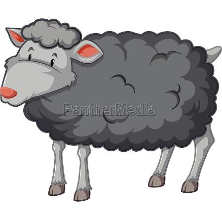 black sheep white background
