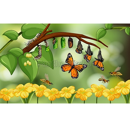 blured nature background with life cycle