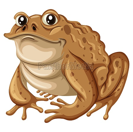 single frog with brown skin