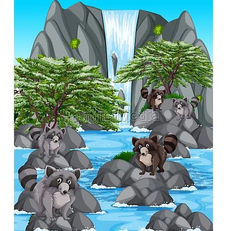 waterfall scene with many raccoons