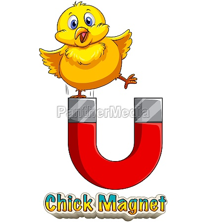 chick attracted to magnet