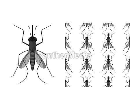 mosquito insects isolated on white background