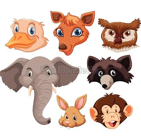 set of wild animals head