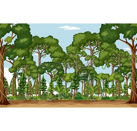 forest scene with many trees at