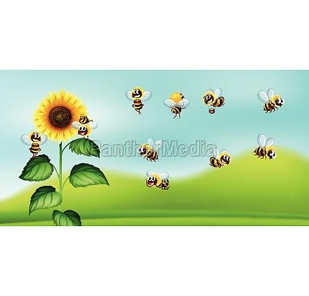 bee and sunflower nature blackground
