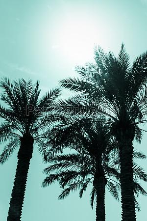 tropical tourism paradise palms sunny summer