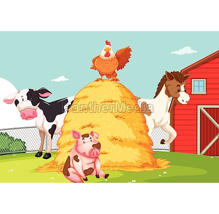 animal at the farmland