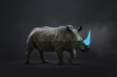 rhinoceros with blue tusk vulnerable to
