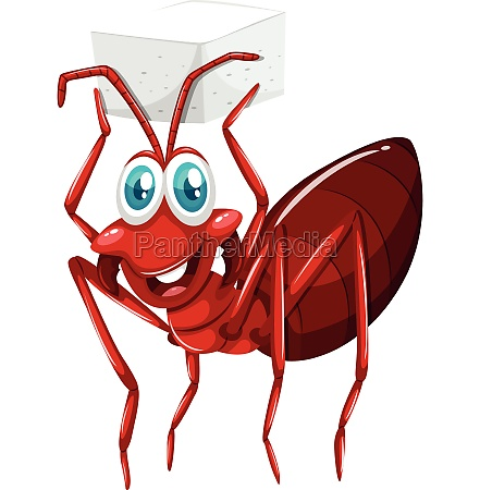 red ant holding cube of sugar