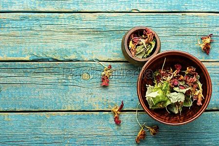 nasturtium in herbal medicine homeopathic herbs