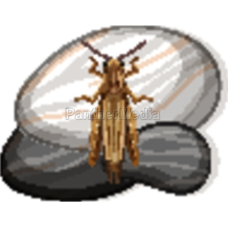 top view of grasshopper on a