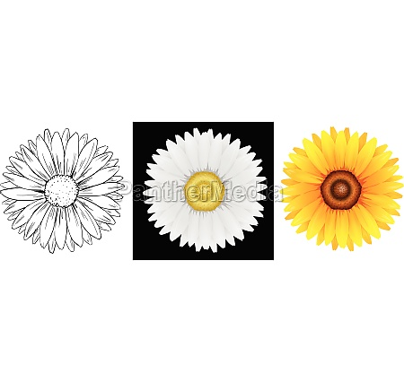 different drafts of sunflower