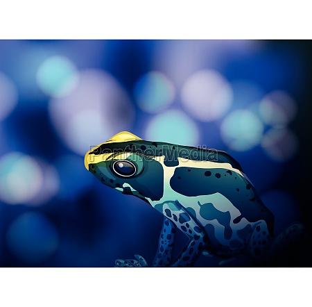 poison dart frogOCa on blue background