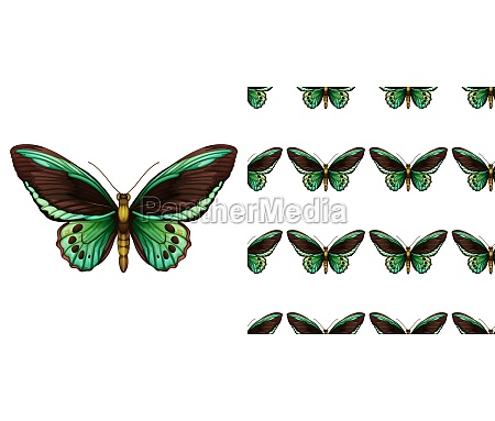 green butterfly and seamless background