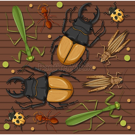 set of different insects on wooden