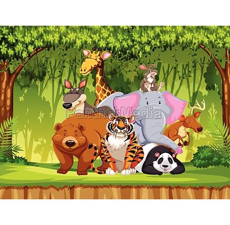 set of wildlife animals