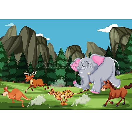 animals run in the nature