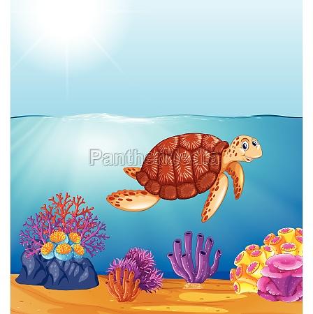 green sea turtle in ocean