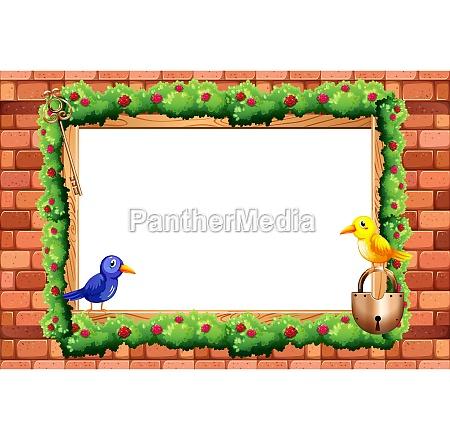 border and birds