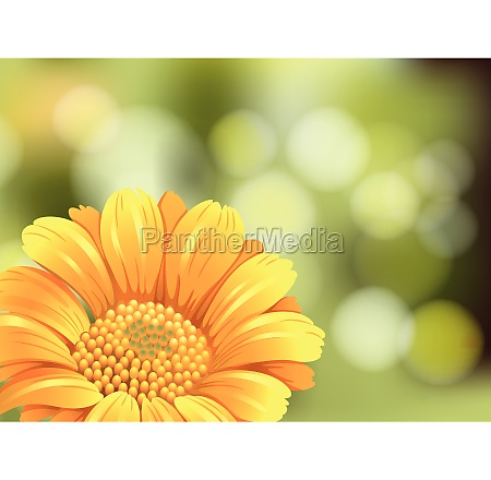 beautiful sunflower on blur background