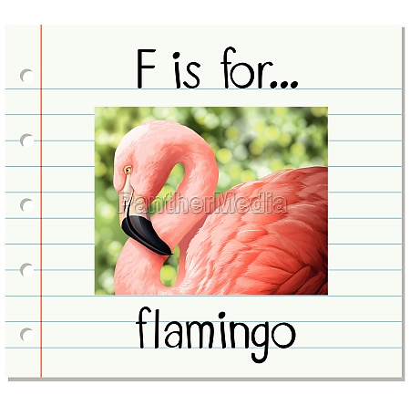 flashcard letter f is for flamingo