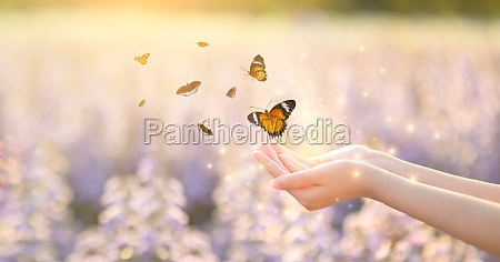 the girl frees the butterfly from