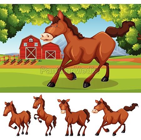 horses at the farmland