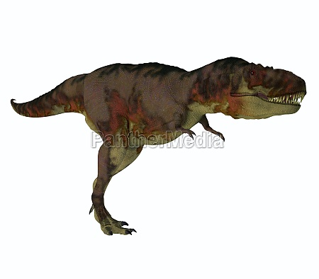 daspletosaurus dinosaur hunter