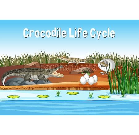 scene with crocodile life cycle
