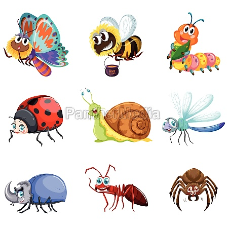 different types of insects