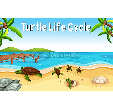 many turtles on the beach scene