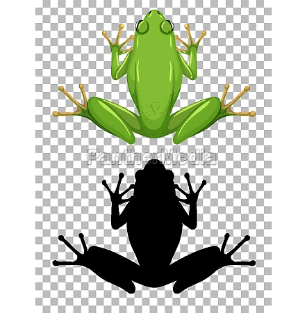 white lipped frog with its silhouette