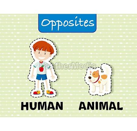 opposite word education flashcard illustration