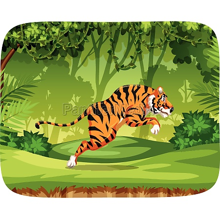 tiger in jungle scene